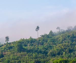 ウッドデッキの材料となる東南アジアの森林