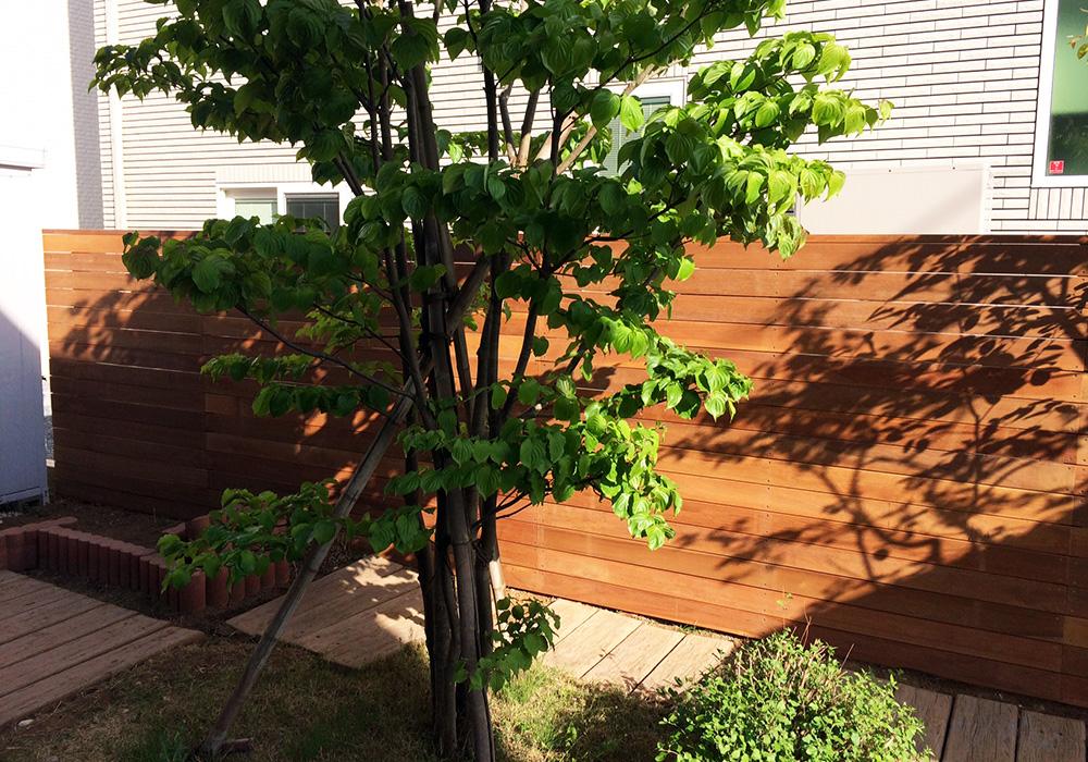 茨城県つくば市ウッドフェンス1植木